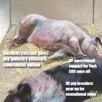 Latest Pork Journal – July/August 2017